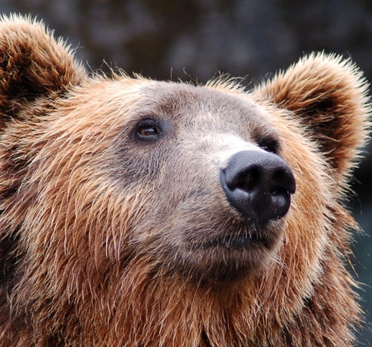 Chi è il gruppo APT Fancy Bear